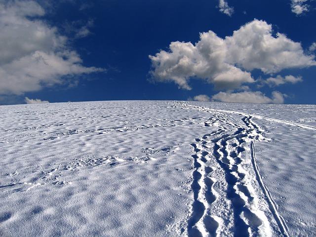 snow-tracks-63988_640